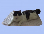 トルマリンマット猫