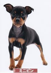 子犬の抱っこで腰が痛い。