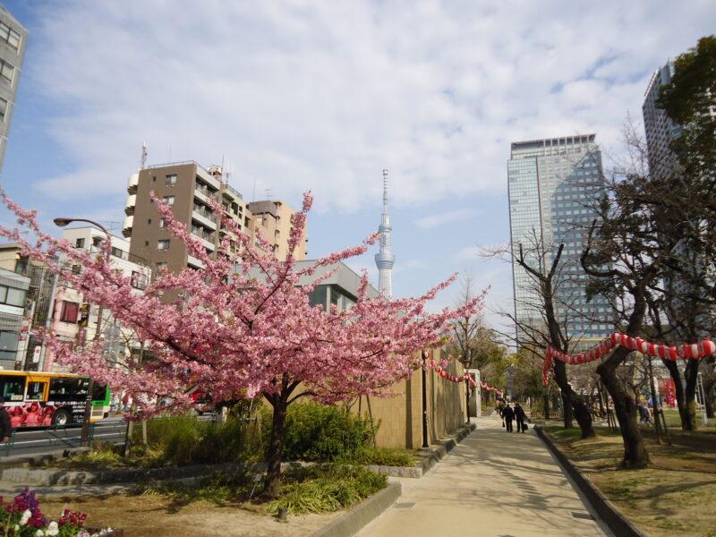 錦糸公園スカイツリー